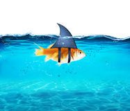 Goldfish acting as shark to terrorize the enemies. Concept of competition and bravery. Goldfish disguised as shark in the sea to terrorize the enemies. Concept Royalty Free Stock Photos