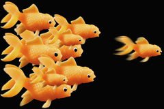 Goldfish ahead of the race. On a black background stock photography