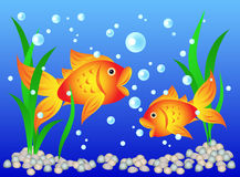 Goldfish in aquarium royalty free illustration