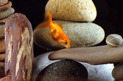 Goldfish in aquarium. Over well-arranged zen stone and nice bokeh of bubbles Royalty Free Stock Images