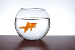 Goldfish in an aquarium Stock Images