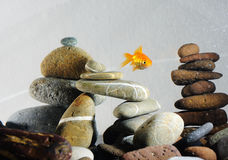 Goldfish in aquarium. Over well-arranged zen stone and nice bokeh of bubbles Royalty Free Stock Photo