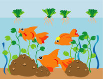 Goldfish Aquarium. Illustrations vector sea Goldfish Aquarium Stock Image