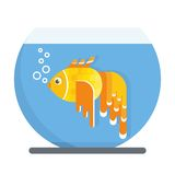 Goldfish in aquarium. Goldfish live in a glass aquarium with blue transparent waters. Objects  on white background. Flat cartoon vector illustration Stock Photography
