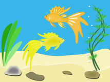 Goldfish. In an aquarium or in the sea among seaweed Royalty Free Stock Photography