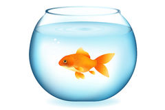 Goldfish In Aquarium. Vector Stock Photography