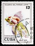 Goldfish (auratus auratus Carassius), ψάρια (στο ενυδρείο πάρκων Λένιν, Αβάνα) serie, circa 1978 απεικόνιση αποθεμάτων