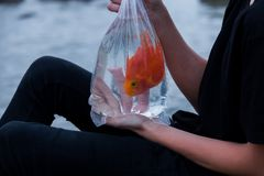 Goldfish in a bag in the hands of a teenager on the beach. Royalty Free Stock Photos