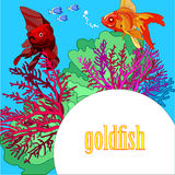 Goldfish on a blue background with algae and corals. Space for text in the lower right corner in a white circle , bright red and orange fish with green seaweed Stock Image