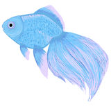Goldfish. Blue goldfish. Side view. Fantasy royalty free illustration