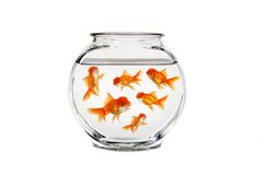 Goldfish Bowl Royalty Free Stock Image