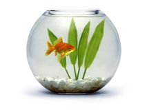 Goldfish bowl. With rocks and plant Stock Image