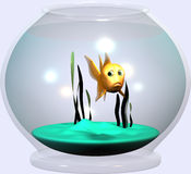 Goldfish bowl. Goldfish looking very sceptical Royalty Free Stock Image