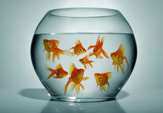 Goldfish in bowl Royalty Free Stock Photography