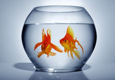 Goldfish in bowl Stock Photos