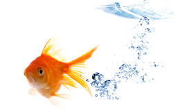 Goldfish with bubbles Royalty Free Stock Image