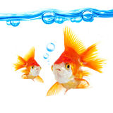 Goldfish and bubbles Stock Photo