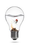 Goldfish in bulb. A goldfish is swimming in a bulb on white background Royalty Free Stock Image