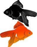 Goldfish carp Royalty Free Stock Images