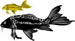 Goldfish carp isolated. On white background vector illustration