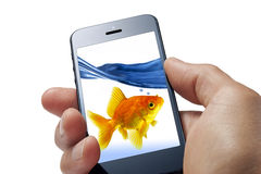 Goldfish Cell Phone Fun. A man holding a mobile cell phone isolated on white close up, with a goldfish and water on the screen Royalty Free Stock Photos