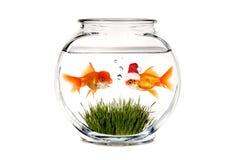 Goldfish che dice a Santa che cosa vuole per natale Fotografie Stock Libere da Diritti
