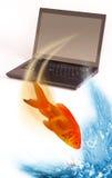 Goldfish che salta illustrazione di stock