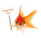 Goldfish choqué d'isolement sur le fond blanc Photo stock