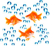 Goldfish com bolhas Fotos de Stock Royalty Free