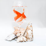 Goldfish and corals Stock Images