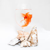Goldfish and corals royalty free stock photo