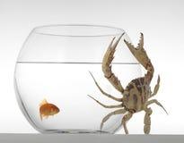 Goldfish with a crab Stock Photos