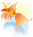 Goldfish in the crown Stock Photography