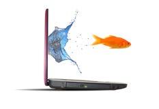 Goldfish dal computer portatile Fotografie Stock Libere da Diritti
