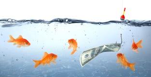 Goldfish in danger - concept deception. Goldfish in danger - dollar as bait - concept deception Royalty Free Stock Image