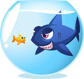 Goldfish with dangerous shark. Goldfish fish in danger shark inside fishbowl, seriously dangerous room mate. With big blue shark staring at little cute scared Royalty Free Stock Image