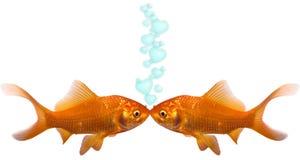 Goldfish dans l'amour Photographie stock libre de droits
