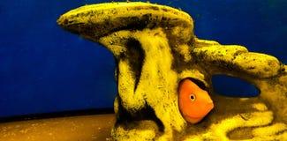 Goldfish dans l'aquarium Poissons dans le château images libres de droits