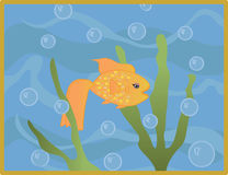 Goldfish dans l'eau Images stock