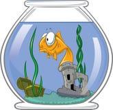 Goldfish dans la cuvette Photo libre de droits