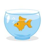 Goldfish dans un aquarium Le symbole de la réalisation de tout désire M Image stock