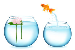 Goldfish de salto Imagem de Stock