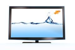 Goldfish, der aus einem stilvollen lcd-Fernsehapparat heraus springt stockbilder