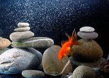 Goldfish di zen Immagine Stock