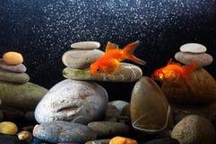 Goldfish do zen Fotografia de Stock Royalty Free