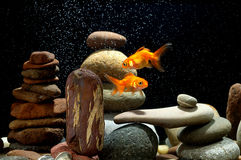 Goldfish do zen Fotos de Stock Royalty Free