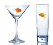 Goldfish dois diferente em dois vidros diferentes Fotos de Stock