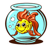 Goldfish domestic pet vector illustration. Cute goldfish domestic pet smiling in a round aquarium vector illustration Royalty Free Stock Photography