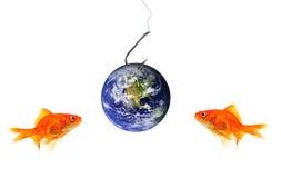 Goldfish dos que mira la tierra del planeta como cebo imagen de archivo