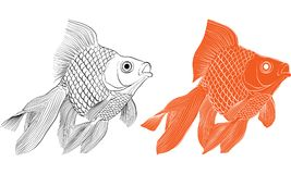 Goldfish drawing vector. Goldfish graphic, goldfish vector ,goldfish drawing Stock Photos